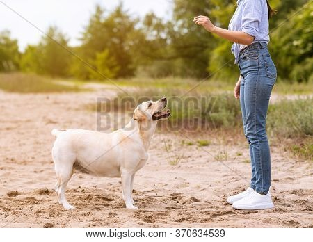 Obedience Concept. Young Girl Giving Treat To Her Golden Retriever Friend, Playing On The Beach, Cop