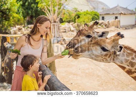 Happy Mother And Son Watching And Feeding Giraffe In Zoo. Happy Family Having Fun With Animals Safar