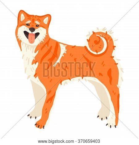 Shiba Inu Or Akita Inu Japanese Breed Of Hunting Dog. Very Clean Purebred Domestic Animal Flat Vecto