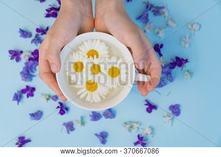 Hands With A Cup With Daisies On A Blue Background. Therapeutic Soothing Tea. The Concept Of Natural