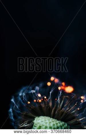 Closeup Of White Dandelion Fluffs On Fire