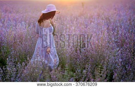 Romantic Lady On A Sage Field Holdis A Sage Bouquet. Girl Wearing Light Purple Lace Dress. Summertim