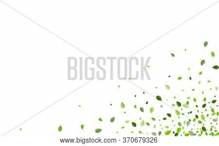 Mint Greens Nature Vector Design. Transparent Leaf Border. Swamp Leaves Fresh Plant. Foliage Herbal
