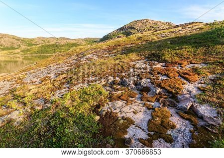 Tundra In The Northern Polar Summer. Beautiful Coastline Of Barents Sea, Arctic Ocean, Kola Peninsul
