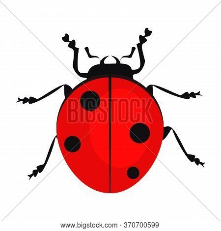 Ladybug Isolated . Beetle, Bug, Entomology. Insects Concept. Can Be Used For Topics Like Nature, Bio
