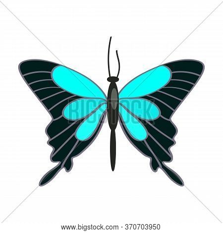 Papilio Ulysses Butterfly Isolated . Tropical Butterfly, Hobby Collection, Lepidoptera. Insects Conc