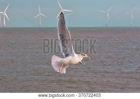 Clean Energy. Seagull With Offshore Wind Farm Turbines Background Natural Renewable Energy. Sustaina