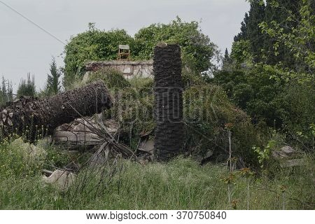 Chair On Abandoned House Roof And Withered Palm Trees Infected By Insect Disease In Overgrown Garden