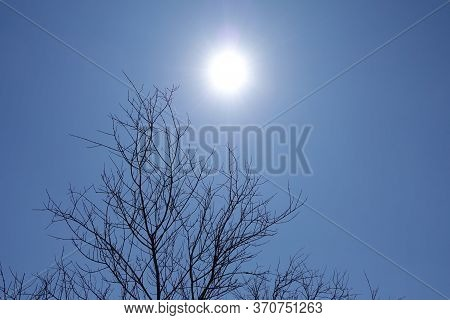 Blazing Hot Sun On Withered Charred Tree Branches Under Clear Blue Sky.