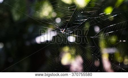 A Spider Web Is A Sticky Net That Spiders Make From Silk To Trap Their Prey. When Insects Fly Or Cra