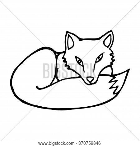 Hand Drawn Fox. Cartoon Fox Outline Doodle Style. Vector Transparent Illustration Isolated On White