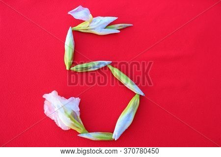 Number 5 Written By Fresh Iris Flowers On A Red Background. Number Five Written In Fresh Flowers Iso