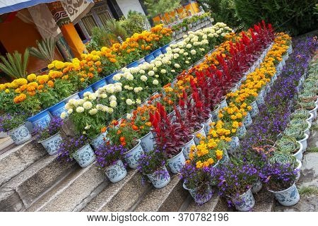 Norbulingka Summer Palade Of Dalai Lama In Lhasa, Tibet, Flowers On Steps Different And Colourful Ar