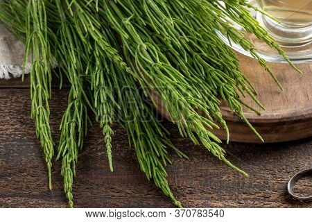 Fresh Horsetail Twigs On A Wooden Table