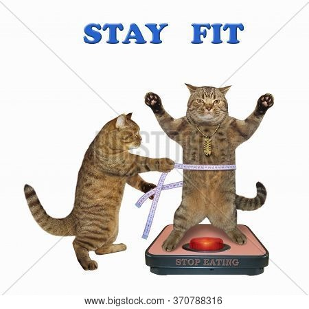 The Beige Cat In A Gold Fishbone Pendant Is Standing On A Weigh Scale. Another Cat Is Measuring This