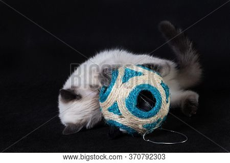 The Kitten Plays With A Large Rope Ball With Holes.