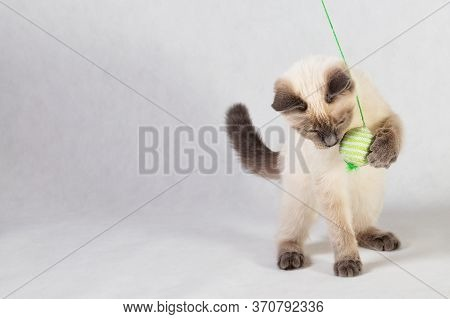 The Kitten Plays With The Ball On The Rope On A Light Background.