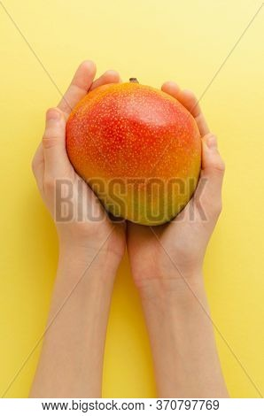 Ripe Mango Fruit Hold In Hands, On A Yellow Background. Tropical Fruit Held In Children Hands. Organ