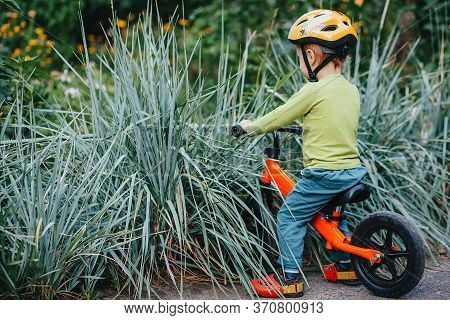 The Child On His Bicycle Drove Into The Prickly Bushes.