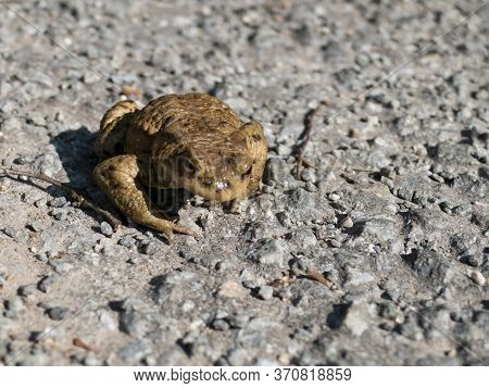 Small Frog In The Nature