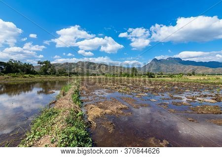 Landscape Scene Midday And Beautiful Blue Sky With Cloud Over A Rice Field After Harvest.