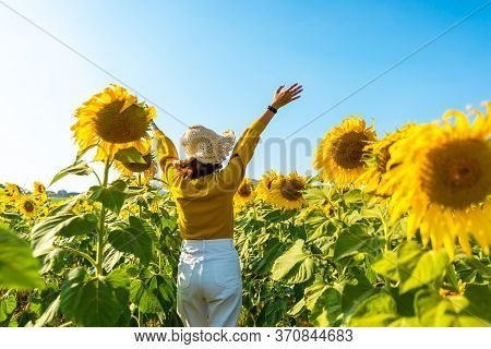 Sweet Girl Travel And Walking On A Field Of Sunflowers.