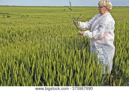 Female Agronomist Controls Wheat