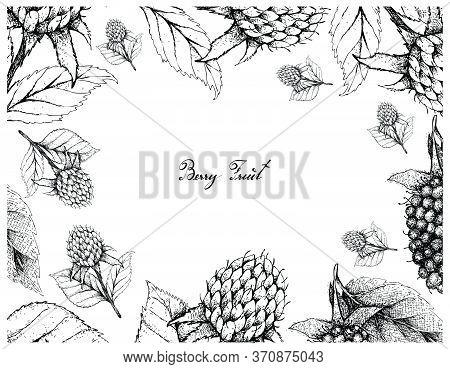Berry Fruits, Illustration Frame Of Hand Drawn Sketch Fresh Kotataberries And Korean Black Raspberri