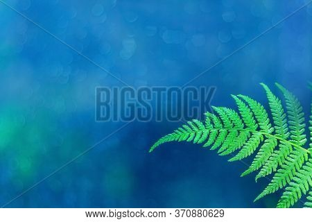 Natural Fern Frond Close-up. Green Fern Leaf On A Beautiful Blue Natural Background. Botanical And S