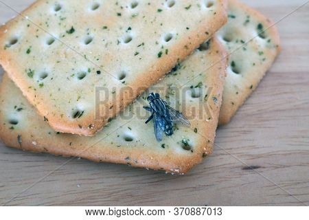 Flies Come On Food. Can Lead To Food And Waterborne Diseases. Flies Are Summer Villains. Health In E
