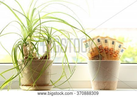 Paper Money Grows In A Flower Pot On A Windowsill Next To Other Flowers. The Economic Growth. Salary