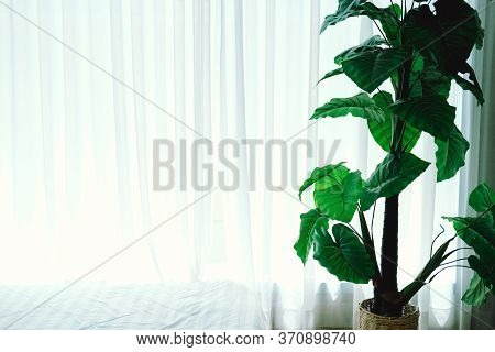 Artificial Plant Leaves Beside See Through Window Curtain.