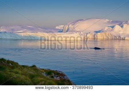 Greenland Ilulissat Glaciers At Ocean With Rwhales Kaporkak