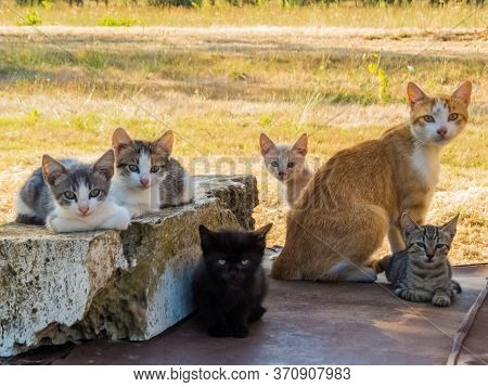 Wild Cats Family In Canino, Central Italy