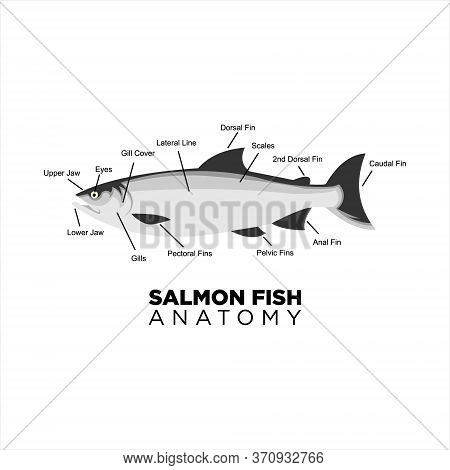 Salmon Fish Vector Anatomy For Education. Print Art Or Sticker Animal Diagram Inspiration