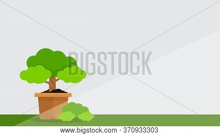 Small Tree Pot At White Grey Wall Background And Copy Space, Potted Tree For Clip Art, Floral Pot Or