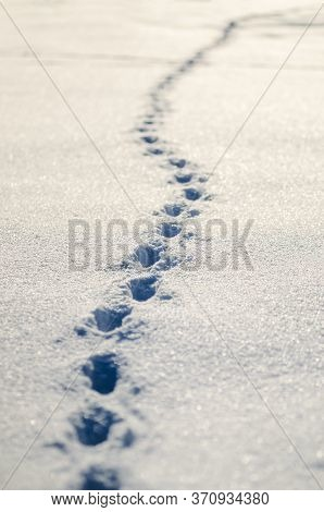 Traces Of A Man In Winter Snow. Sunny Winterday. Snow With Imprints Of Human Footprints. Imprints Of
