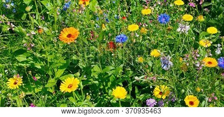 Beautiful Floral Background Of Marigolds, Cornflowers And Other Wildflowers.