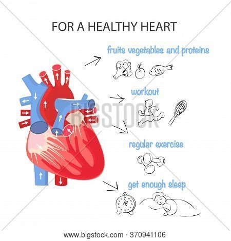 Healthy Heart. Rules For The Health Of The Cardiovascular System. Anatomical Structure Of The Heart.