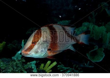 Grouper Fish Underwater In The Coral Reef