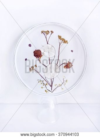 Handmade Embroidery With Dried Flowers And Withered Herbs On Mesh Fabric, Grid, Tulle, Round Hoop On