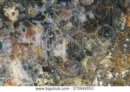 Close-up Texture Of Fossilized Coral Of Quartz-chalcedony Composition