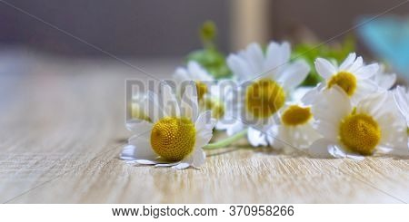 Posy Of White Daisies With Vibrant Yellow Disk Florets Laying Casually On Wooden Slated Table In Out