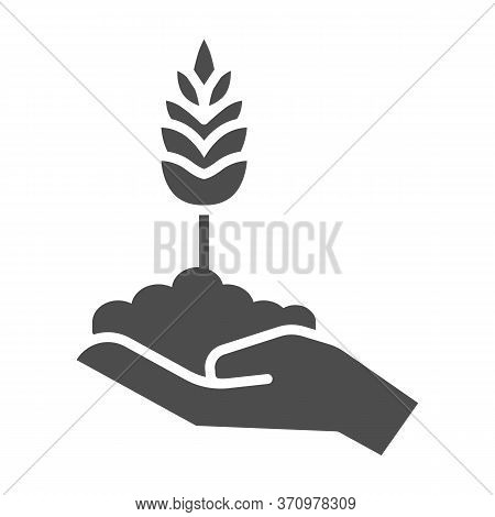 Wheat Spikelet On Human Hand Solid Icon, Agriculture Concept, Grows In Caring Hand Sign On White Bac