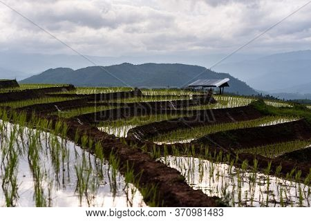 Easy Cabin In Agriclture Terraced Rice Fields Area On Mountain In Forest On Doi Inthanon. Chiang Mai