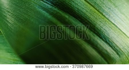 Macro Green Leaf With Drop Of Dew. Nature Minimalistic Banner Background With Copyspace. Stock Photo