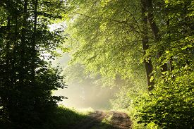 Country road park forest path trail sunrise Nature background sun fresh lush Nature background landscape Nature background sunny trees Nature background foliage Nature background mist fog Nature background light Nature background leaves Nature background.