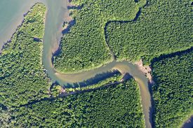 Aerial photo of mangrove forest and river delta