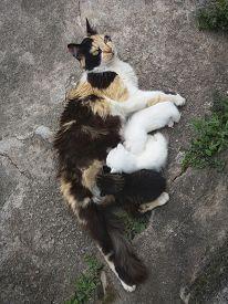 Mother Cat Breast Feeding Puppies Kittens, Nursing Puppies, Small Kittens Feeding Puppies, Drinking
