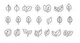 Vector Set Of Leaves For Decoration The Illustrations, Scrapbooking And Coloring Books, Blank Outlin